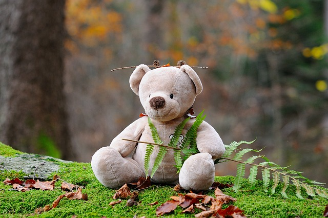 plyšový medvěd v lese.jpg